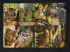 Kruger 99/28 Dierentuindieren poezieplaatjes