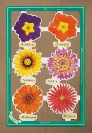 C5020: Bloemen met Dahlia poezieplaatjes