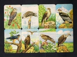 Kruger 99/35 Roofvogels poezieplaatjes