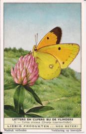 Liebig: Letters en Cijfers bij de Vlinders - Colias croceus