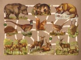 Wilde dieren van de Veluwe poezieplaatjes 7376