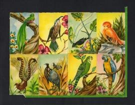 E.O. & Co 5803 Vogels poezieplaatjes (niet compleet)