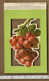 Poezieplaatje druiventros EWC04437