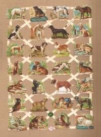 Heel veel honden poezieplaatjes 7337