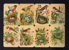Kruger 99/13 Vogels bij nest poezieplaatjes