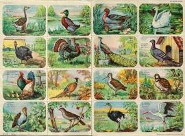Editions Hemma Serie 38 - Tableau 1 Vogels