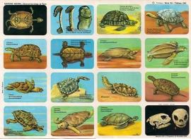 Editions Hemma Serie 39 - Tableau 290 Schildpadden