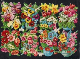 AFKH 30 bloemen van alles poezieplaatjes