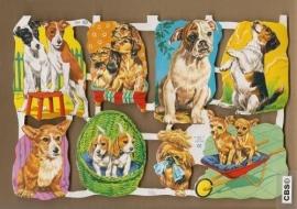Allerlei soorten hondjes poezieplaatjes MLP 1545