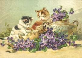 Poesjes in Maartse viooltjes Reliefkaart EF 3047