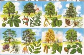 Allerlei bomen poezieplaatjes MLP 1261 A