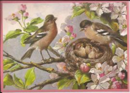 Voorjaar met de vogels Glitter prentbriefkaart [SV 6Gg055]