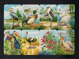 Kruger 99/15 Vogels met Kolibri poezieplaatjes