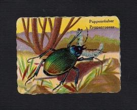 Vierkant antiek poezieplaatje Poppenroover
