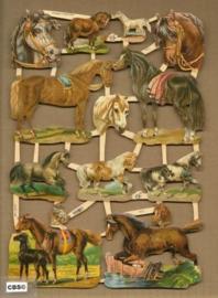 De mooiste spring- en rijpaarden poezieplaatjes 7211