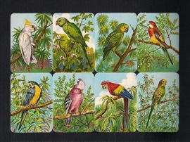 Kruger 99/10 Papegaaien poezieplaatjes