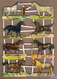 Paardenrassen o.a. Trotter Poëzieplaatjes 7263