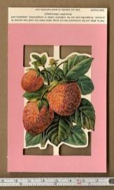 Poezieplaatje aardbeien EWC04429