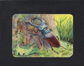 Vierkant antiek poezieplaatje Insekt 4