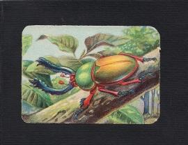 Vierkant antiek poezieplaatje Insekt 3