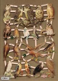 Roofvogels en Uilen poezieplaatjes 7333
