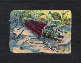 Vierkant antiek poezieplaatje Insekt 2