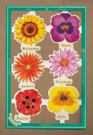 C5019: Bloemen met viooltje poezieplaatjes