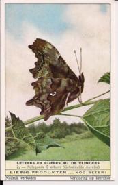 Liebig: Letters en Cijfers bij de Vlinders - Polygonia C album