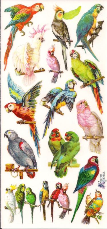 Papegaaien poezieplaatjes Stickers C71