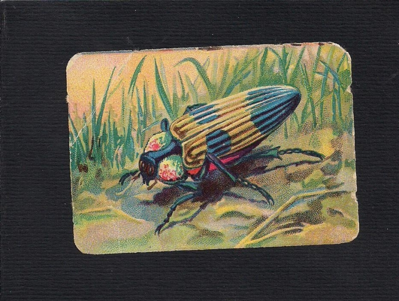 Vierkant antiek poezieplaatje Insekt 1