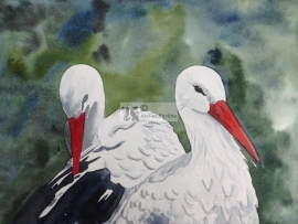 Stork watercolor painting