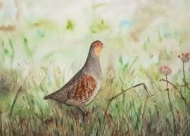Vogel aquarel schilderijen