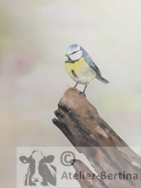 Pimpelmees aquarel schilderij
