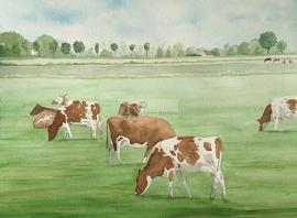 Rood bont Kühe-Aquarelle