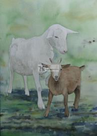 Moeder liefde. Geit aquarel schilderij