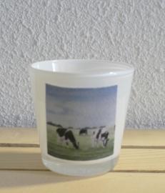 Sfeerlichtje koeien