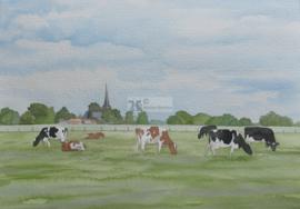Koeien bij Lettele