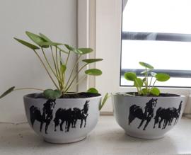 Pannenkoek plant met bloempot (paard / koe)
