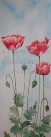 Poppies Aquarelle malerei