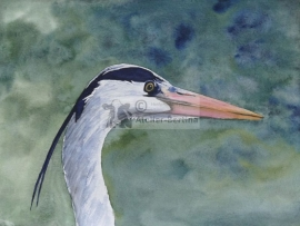 Heron watercolor painting