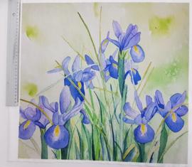 Iris 45/ 50 cm stof