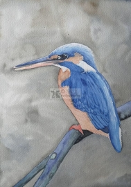 Vogel Aquarelle