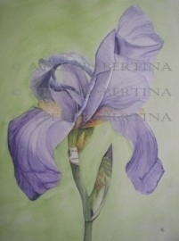 Iris watercolor painting