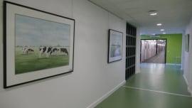 December 2015-maart 2016 Aquarel expositie Ziekenhuis Nij Smellinge