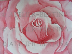 Rose Aquarelle malerei