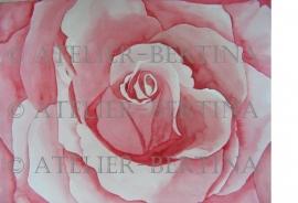 Roos aquarel schilderij