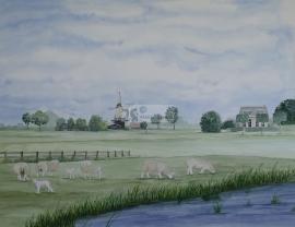 Landschap schapen en molen.