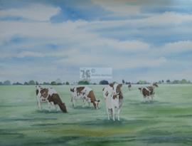 Roodbonte koeien aquarel schilderij