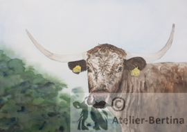 Koeien aquarel schilderijen