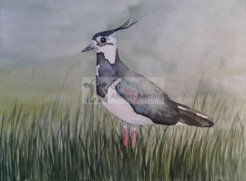 Kievit/ Ljip aquarel schilderij